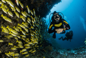 Diving in the Deep Blue Azores