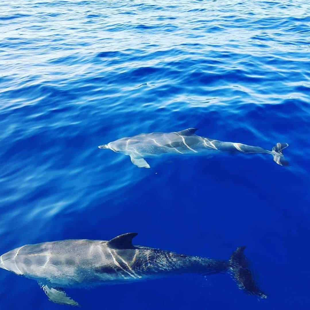 Excursión de cetáceos por Tenerife sur