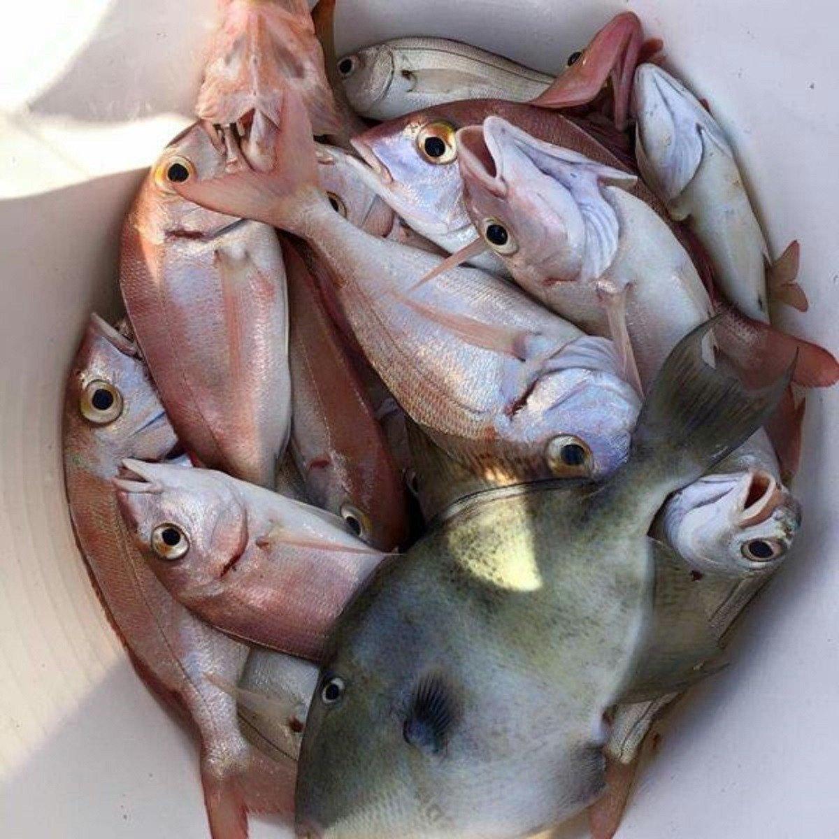 Salidas de Pesca en barco por Fuengirola
