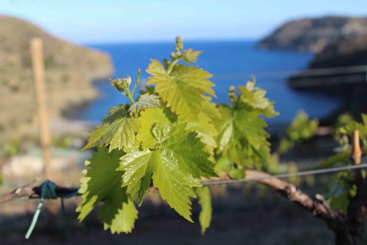 Mar y vinos desde Badalona