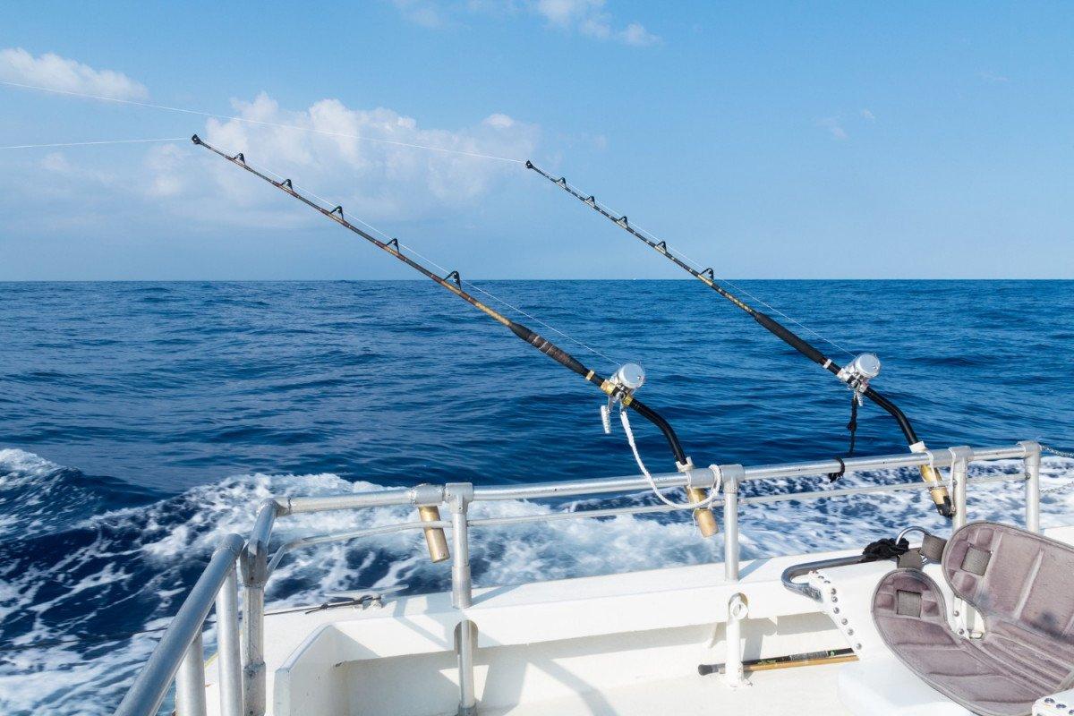 Pesca y avistamiento de Delfines en Valencia