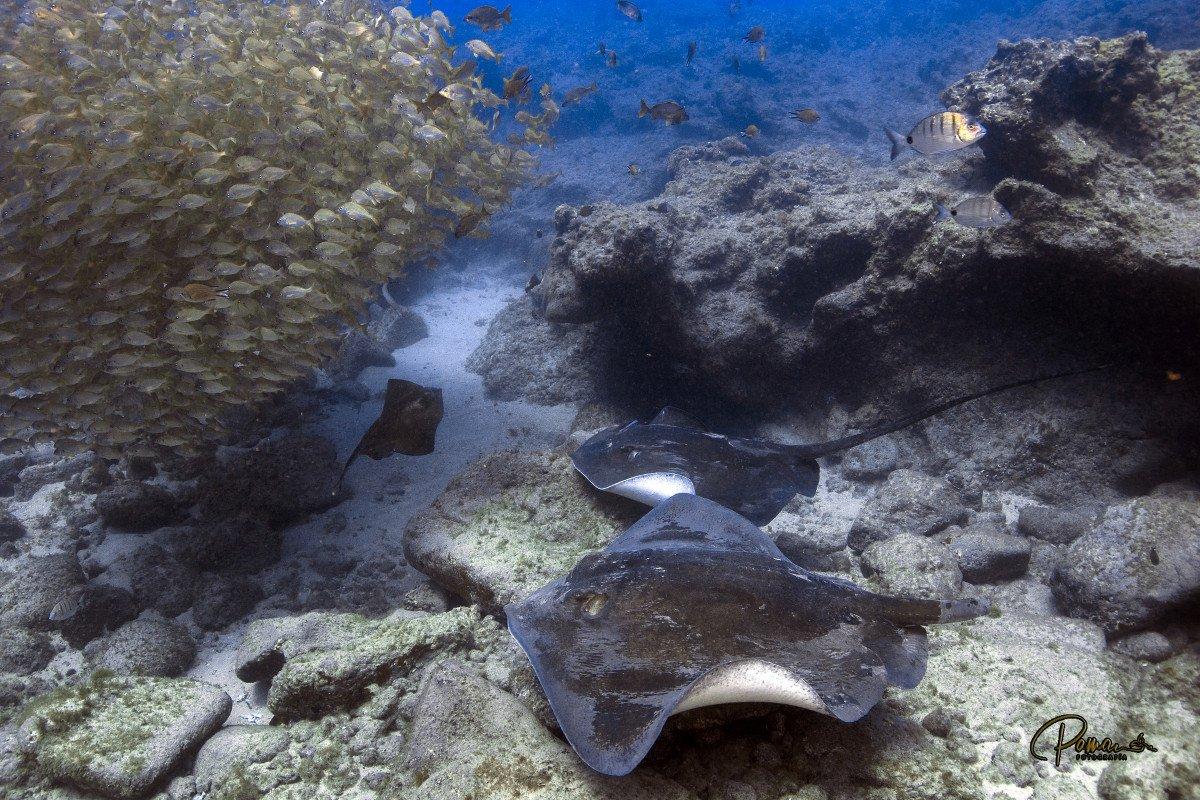 Crucero de 7 días y buceo por el sudoeste de Tenerife y La Gomera