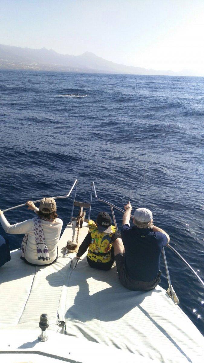 Excursión de pesca en Tenerife sur