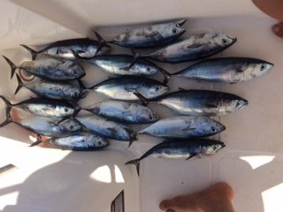Excursiones de pesca Benidorm, Altea y Calpe