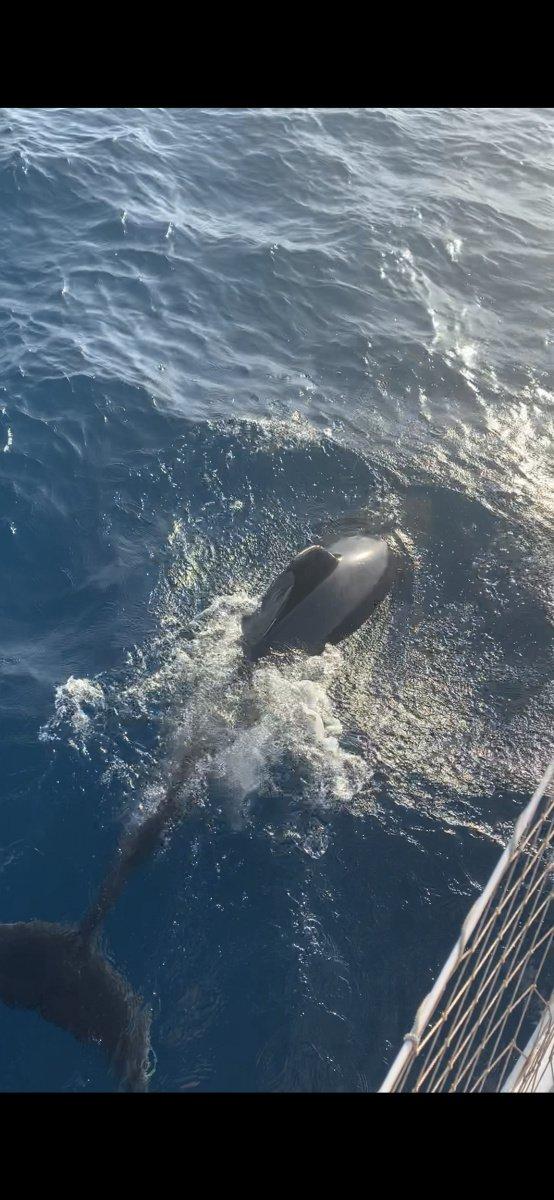 Navegación por la bahía de Santa Pola y Tabarca al atardecer