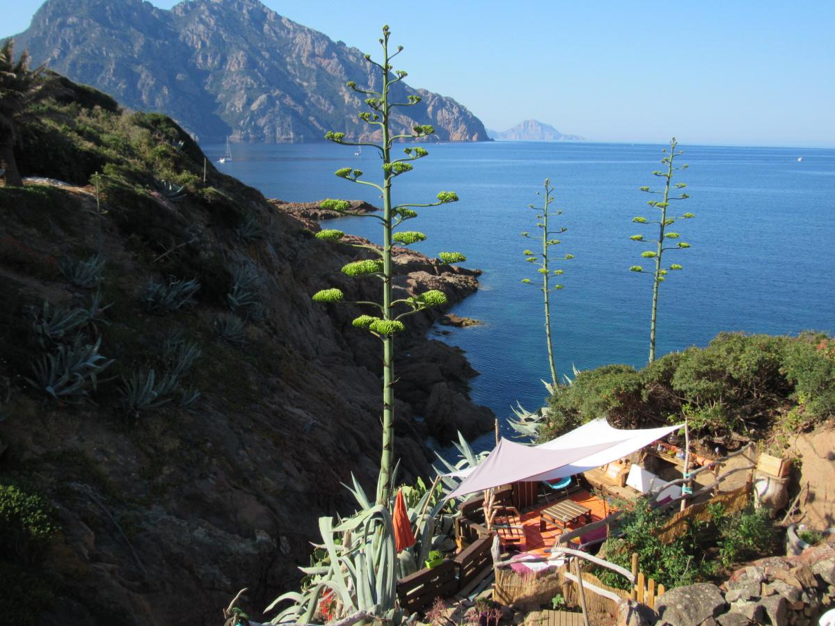 Navigando dalla Liguria fino Corsica