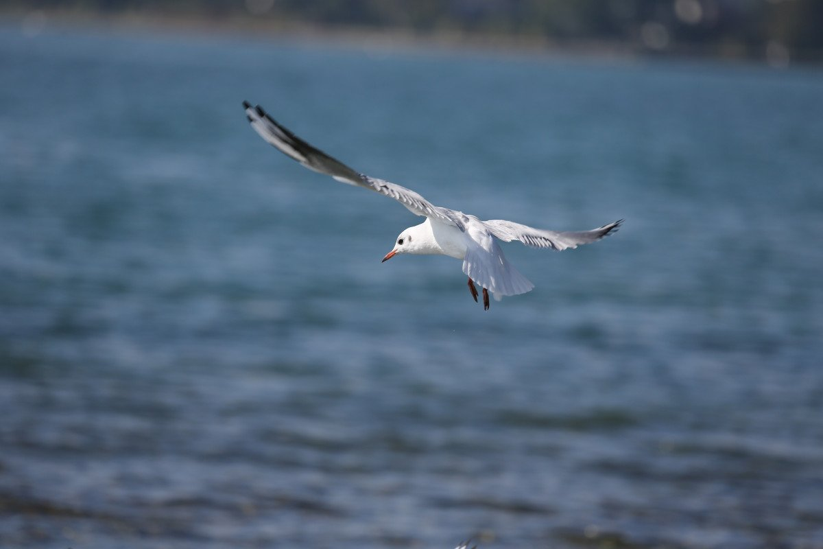 Salida pelágica de navegación por Gijón para ver aves en migración