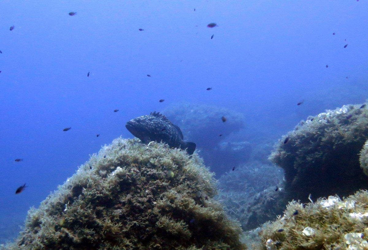 Fin de semana de buceo en Islas Columbretes